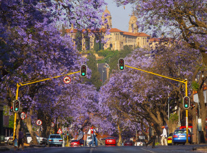 Jacaranda_Trees_Pretoria